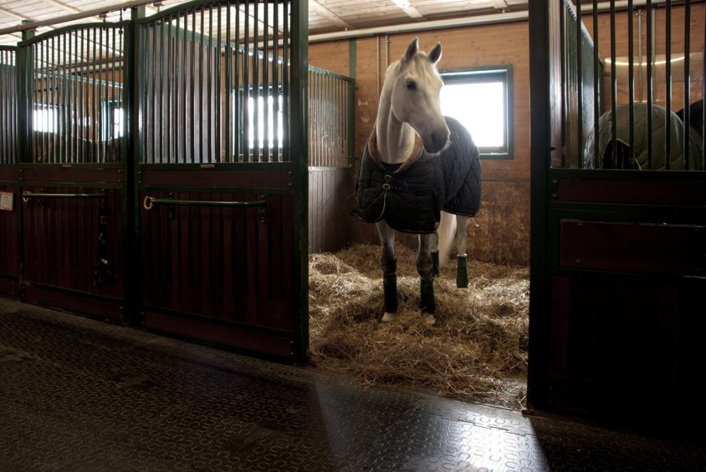 Na nastilju iz slame se konji odlično počutijo.