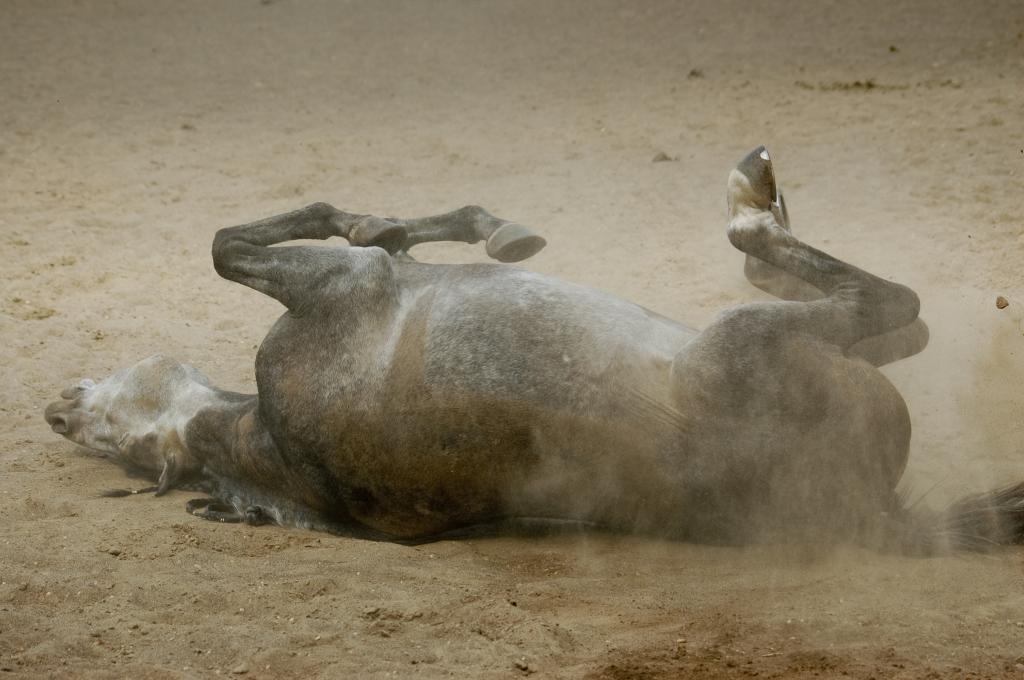 Le najboljše za naše konje.