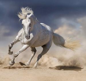 Primerna podlaga z EquiSand® mivko je največ kar lahko naredite za vašega konja.