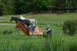 """""""Oče"""" učnega konja Valnetino je Andrej Žnidaršič, ki je leta 1989 pričel z učenjem uravnoteženega jahanja."""